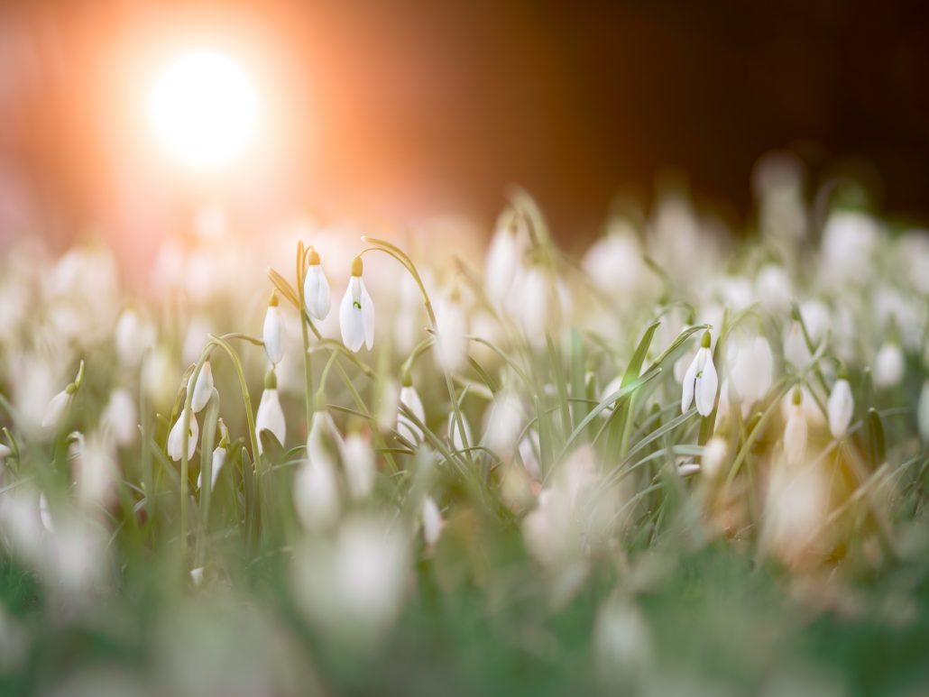 close up photo of a bed of white flowers 953241 1030x773 - Our favourite things to do during half term