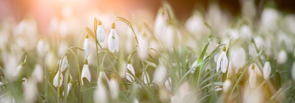 close up photo of a bed of white flowers 953241 1210x423 - Our favourite things to do during half term